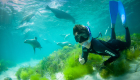 Adventure-Bay-Charters-swimming-with-sealions-02-web