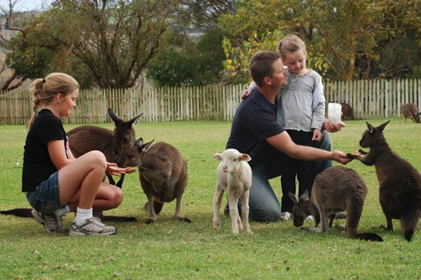 Glen-Forest-Tourist-Park-feeding-the-animals
