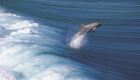 port-lincoln-dolphin-jumping-from-wave
